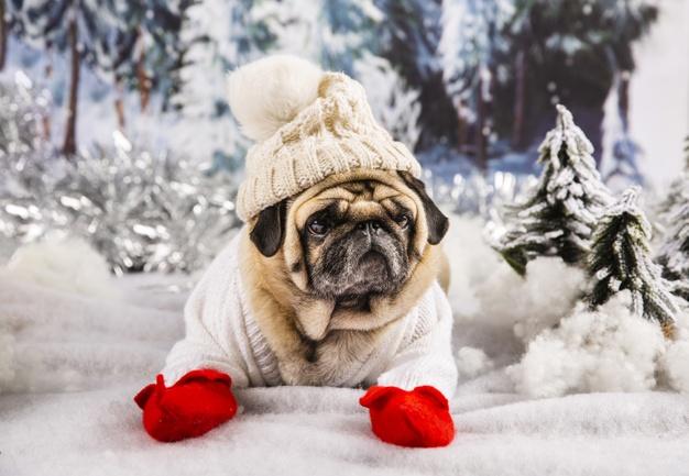 mops med juletrøje