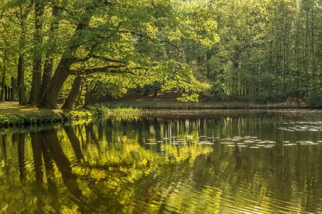 skov sø